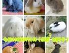 宠物兔批发 猫猫兔 垂耳兔 狮子兔 安哥拉兔 小白兔子