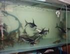 临时鱼缸洗濯养护 鱼缸维修 鱼缸造景 鱼缸订做