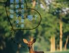 日本旅行生活小动物篇奈良的鹿
