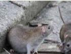 重庆酒店餐饮茶楼会所专业灭鼠除虫