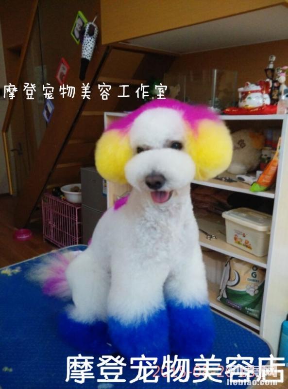 北京有家摩登宠物美容师培训学校
