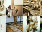 东莞白蚁防治 杀虫灭鼠 龙科专业高效