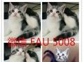 猫咪宝贝常年出售加菲猫,异短,美短,波斯猫,英短蓝猫