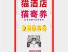 深圳宠物酒店,度假式猫寄养猫酒店,深圳春节猫寄养