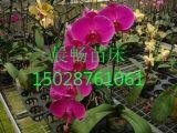 移动育苗床 温室花卉种植床 移动苗床厂家