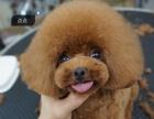 宠物美容培训招生中