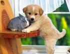 全国专业宠物托运 宠物运输 方便 安全 准时 价低实惠