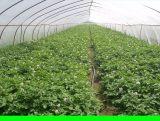葫芦岛富增蔬菜批发配送