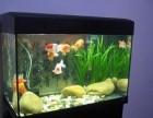 专业处置鱼缸水质 鱼缸造景 鱼缸洗濯