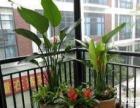 植物租摆价格优惠(盆友园艺花卉服务中心)