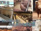 云南肉牛养殖利润分析