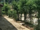 西昌周边 海南乡古城村 土地 800平米