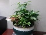 北京綠植租售花卉租擺室內外綠化花木批發
