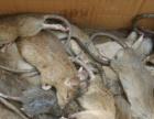 我们是永州爱卫环境科技道县灭鼠公司