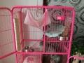 出售三层豪华猫笼、封闭式猫厕所等全套物品,看描述