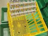 批发种蛋箱 种鸡场专用种蛋周转筐 种蛋运输筐