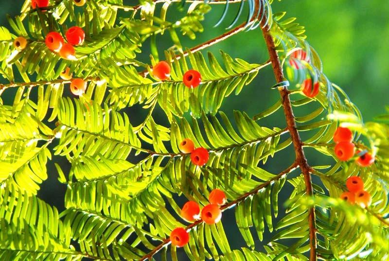 珍贵树木价值评估,观赏树价值评估,绿化树价值评估,拆迁评估