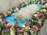 上海寵物火化寵物殯葬動物尸體火葬寵物善終服務24小時上門接送