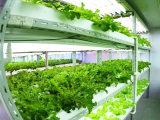 植物生长灯供应商哪家好——沧州植物生长灯批发