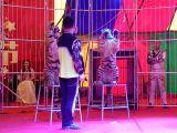 舟山地产商场庆典皇家马戏团表演
