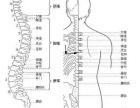 为什么北京百灵奇草贴可以治疗膝关节骨质增生