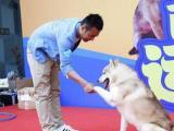 上海专业宠物训练训犬狗狗训练基地护主训练