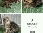 多只可爱猫咪找新家