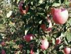 峰阳 土地 25亩 果园