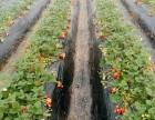 户外踏青出游,黄岛采摘草莓+爬小珠山野生动物园