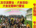 鼎峰狗场繁殖基地出售 大头狮藏獒幼犬 欢迎上门选购
