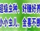 千华8号黄粉虫养殖加盟