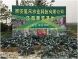 西安蔬菜批发,送菜的公司