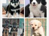 基地直销各种世界名犬一包健康纯种一活一可刷卡