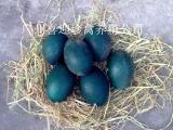 供应广东鸸鹋蛋,小鸸鹋,鸵鸟蛋