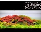 梦景水族 因为专注,所以专业 水草造景