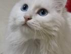 送养帮猫猫找新主人