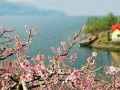 河口赏桃花一日游
