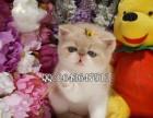 重庆哪里有卖加菲猫 重庆哪里有卖宠物猫加菲猫