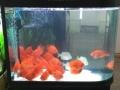 生态鱼缸水族器械处理