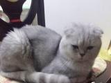 矮脚猫咪可以去新家啦!