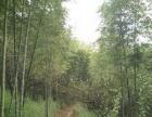 政和 林屯 土地 15亩+37亩