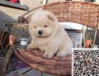 出售纯种松狮幼犬 价格合理品质保证可上门挑选