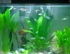 昆明鱼缸养护 鱼缸托管