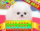 北京專業博美狗場 種公專業配種 可送狗狗上門