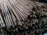 批發唐山綠化支撐杉木桿 竹竿 高壓電線防護沙松桿