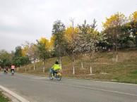 深圳周边游 农家乐体验 团建活动 亲子活动