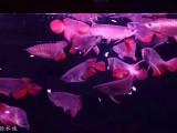 鱼缸清洗观赏鱼出售水族滤材更换鱼缸维修