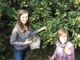 苏州太湖西山岛农家乐旅游包吃包住采橘子二日游超实惠的价格