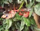 园林绿化工程,花卉租摆服务,花卉苗木批零
