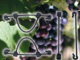 塑料绑枝卡葡萄绑枝专用产品